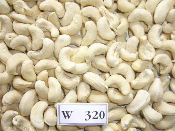 BEST QUALITY CASHEW NUTS