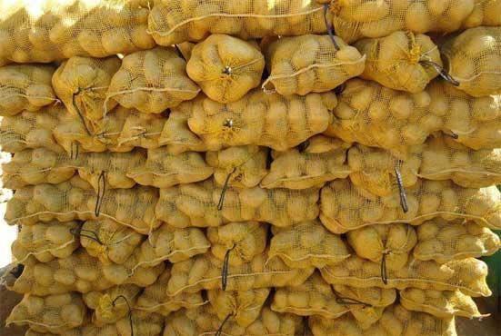 Premium High Quality Healthy Potato Containing Calcium , Magnesium for Sale