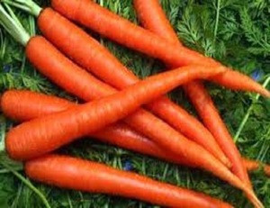 FRESH CARROTS FOR SALE AFFORDABLE PRICE