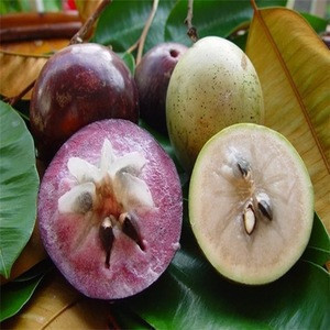 HOT SALE WITH FRESH STAR APPLE: HOT MARKET