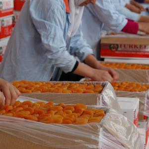 SUPER ADORABLE Fresh apricot, Organic Fresh apricot, Fresh Apricot fruit from UK