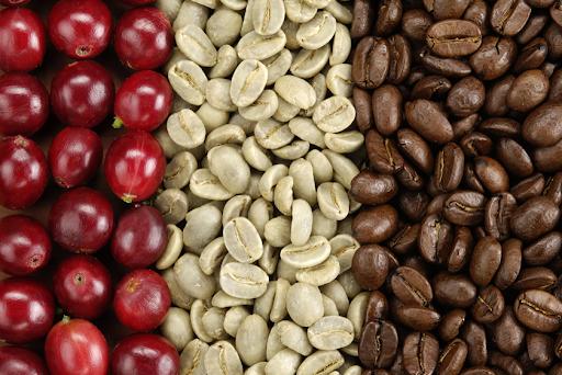 Vietnam robusta roasted coffee beans - Green Coffee Export to EU, USA, Korea, Japan, UAE - Roasted Coffee at Cheap Price