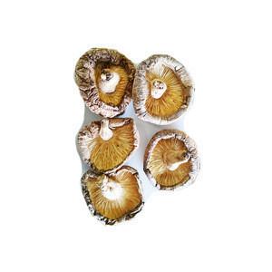 1kg Whole Wild healthy longevity freeze dried shiitake mushroom cultivation