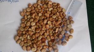 Fava Beans / Broad Beans 50- 80/100