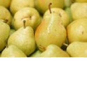 FRESH PEARS FRUIT from South Africa