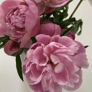 Birthday funeral flowers  wedding party club fresh flower deliveryflower peony