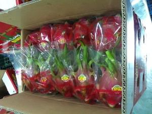 Dragon fruit Vietnam specialties - fresh dragon fruit for sale - red dragon fruit
