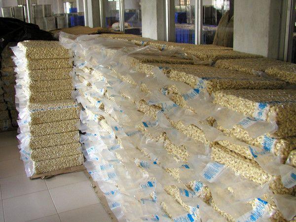 Quality Organic W320/WS/WSP Raw Cashew Nut Factory Wholesale Price