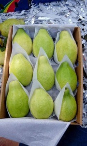 Fresh egyptian guava high quality (A)