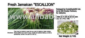 Jamaican Purple Escallion