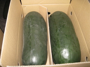 Winter melon/Traditional export commodities