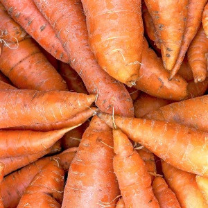 Hot sale South Africa fresh Organic carrot with export quality