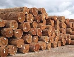 Timber & Wood Logs