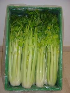 Bio Celery