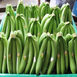 Fresh Long Green Cavendish Banana Exporters In USA