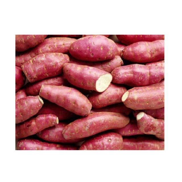 Export Sweet Potato from Vietnam - High quality fresh potatoes export to EU, USA, Korea, UAE - Wholesale