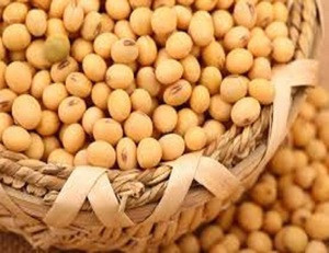 NON GMO DRIED CHEAP SOYBEANS FOR SALE AFFORDABLE PRICE