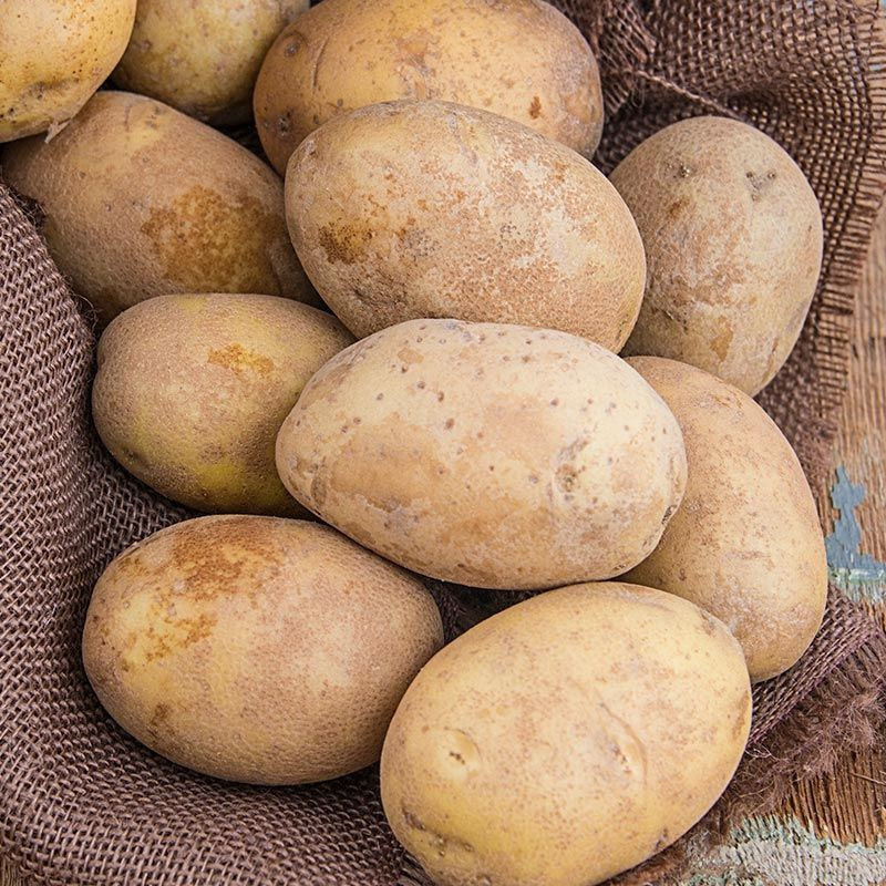 Fresh potatoes for sale good price