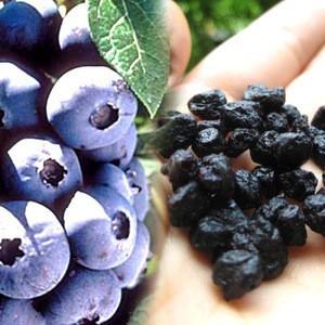 Freeze dehydrate blueberrie