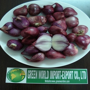 FRESH RED ONION - BEST PRICE - HIGH QUALITY