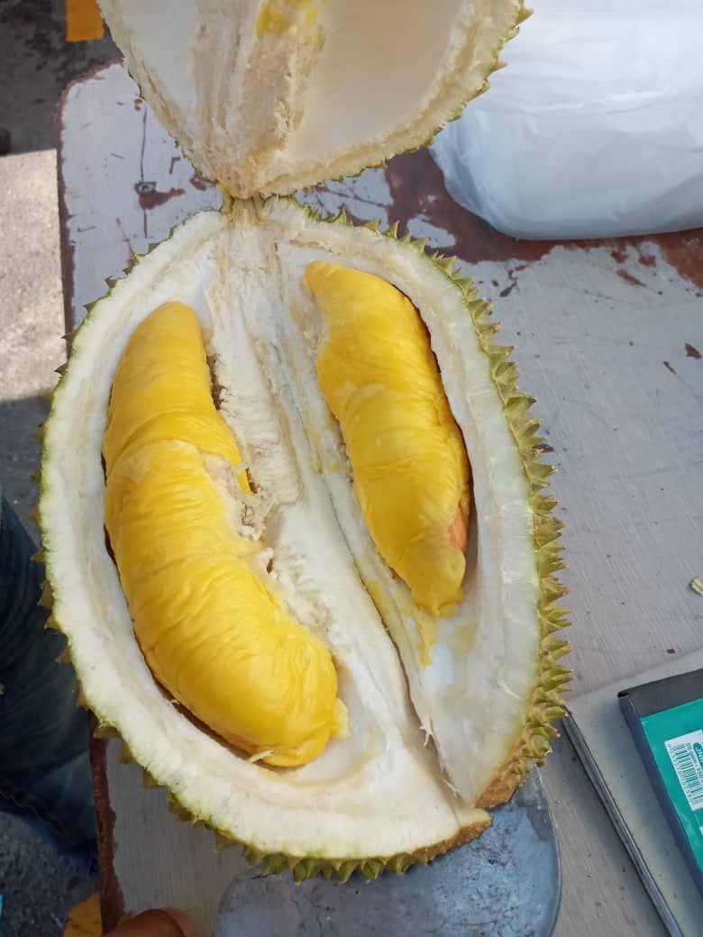 Frozen D197 Musang King Durian