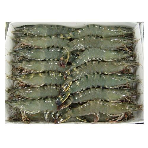 Frozen Fresh Shrimp - HLSO black tiger shrimp export to EU, USA, Korea, Japan