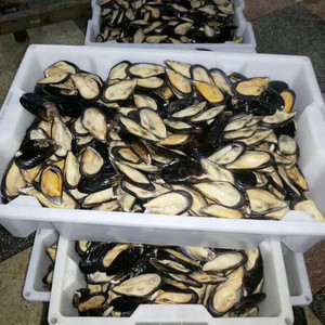 New arriving wholesale price frozen half shell mussel