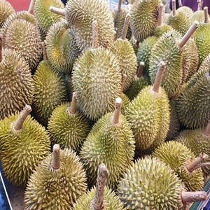 Premium Quality Delicious Frozen Fresh  Musang King Durian Pulp