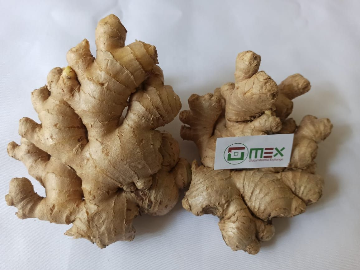 High Quality Best Price Fresh Ginger Young And Old All Types