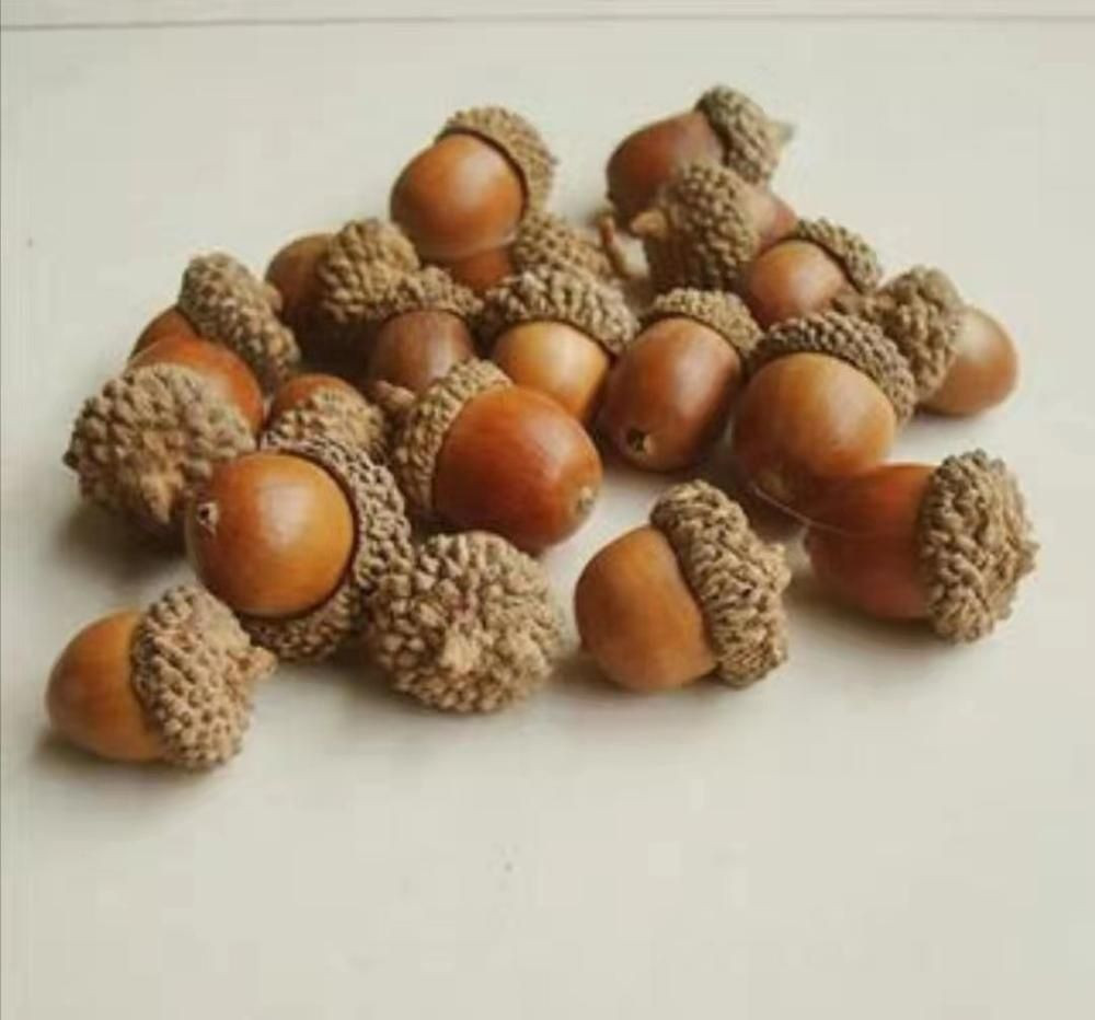 Wild Acorn Nuts&Kernels for Edible Starch and Pigs Feed