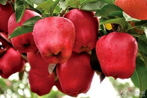 125# huaniu apple