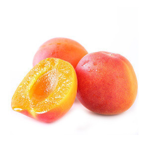 Fresh Apricot Sweet Wholesale Fresh Apricot Fruit With Good Price