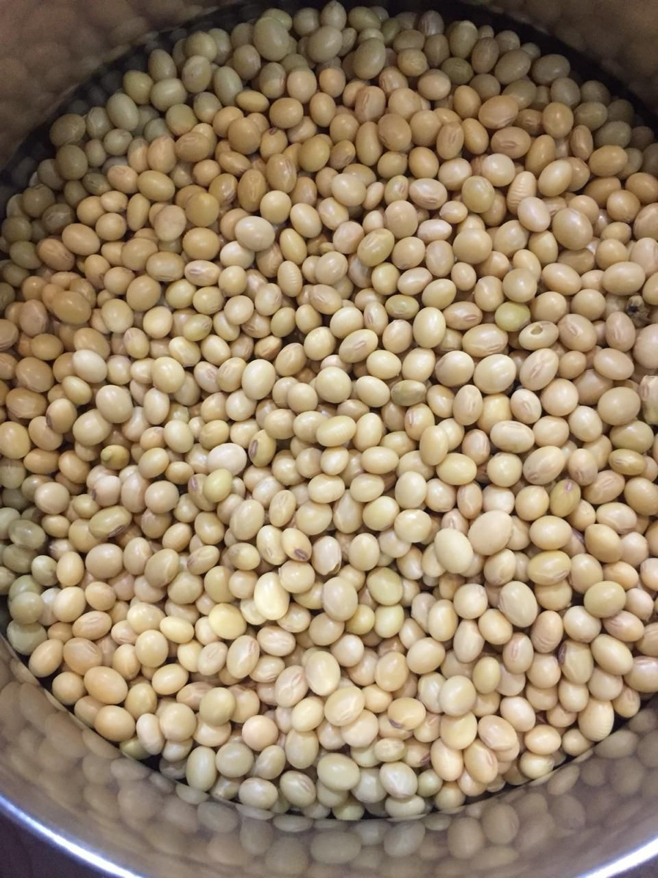 NON GMO AND GMO SOYBEAN