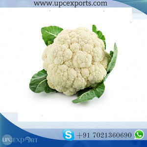 Bulk pack India high quality new crop fresh cauliflower