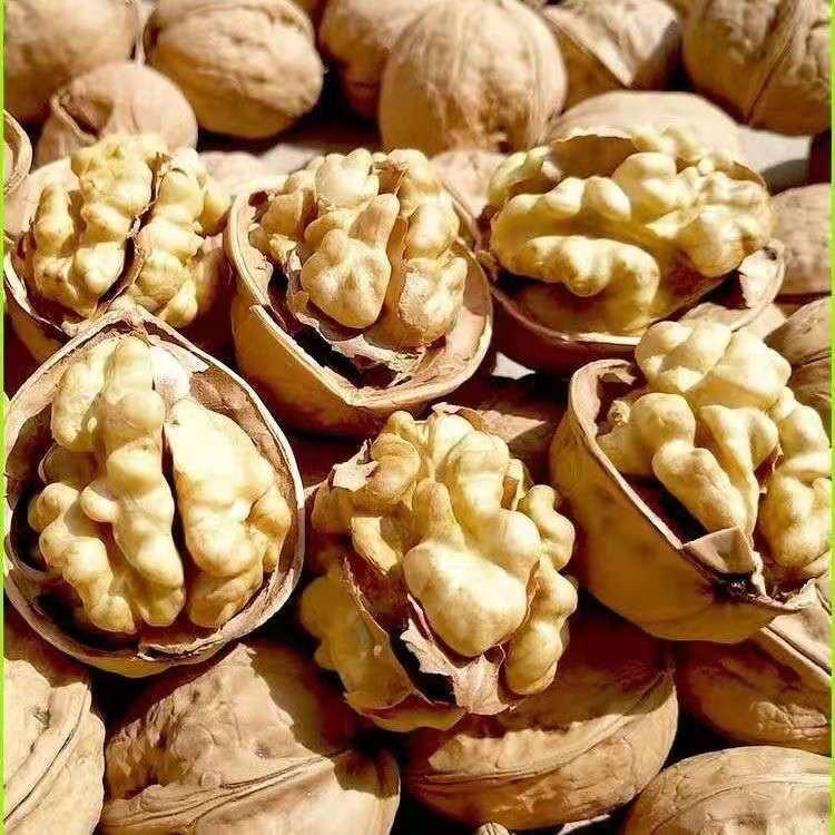 Quality Dried Walnuts in Shell/Walnuts Kernels