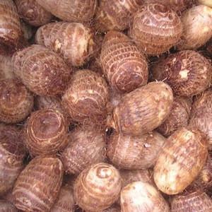 Taro , Fresh Taro, Dried Taro from EU/THAI