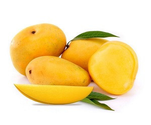 Bulk Alphonso Mangoes Supplier