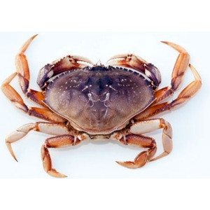 Red King Crab,Alive King Crab/ LIVE Russian king crab