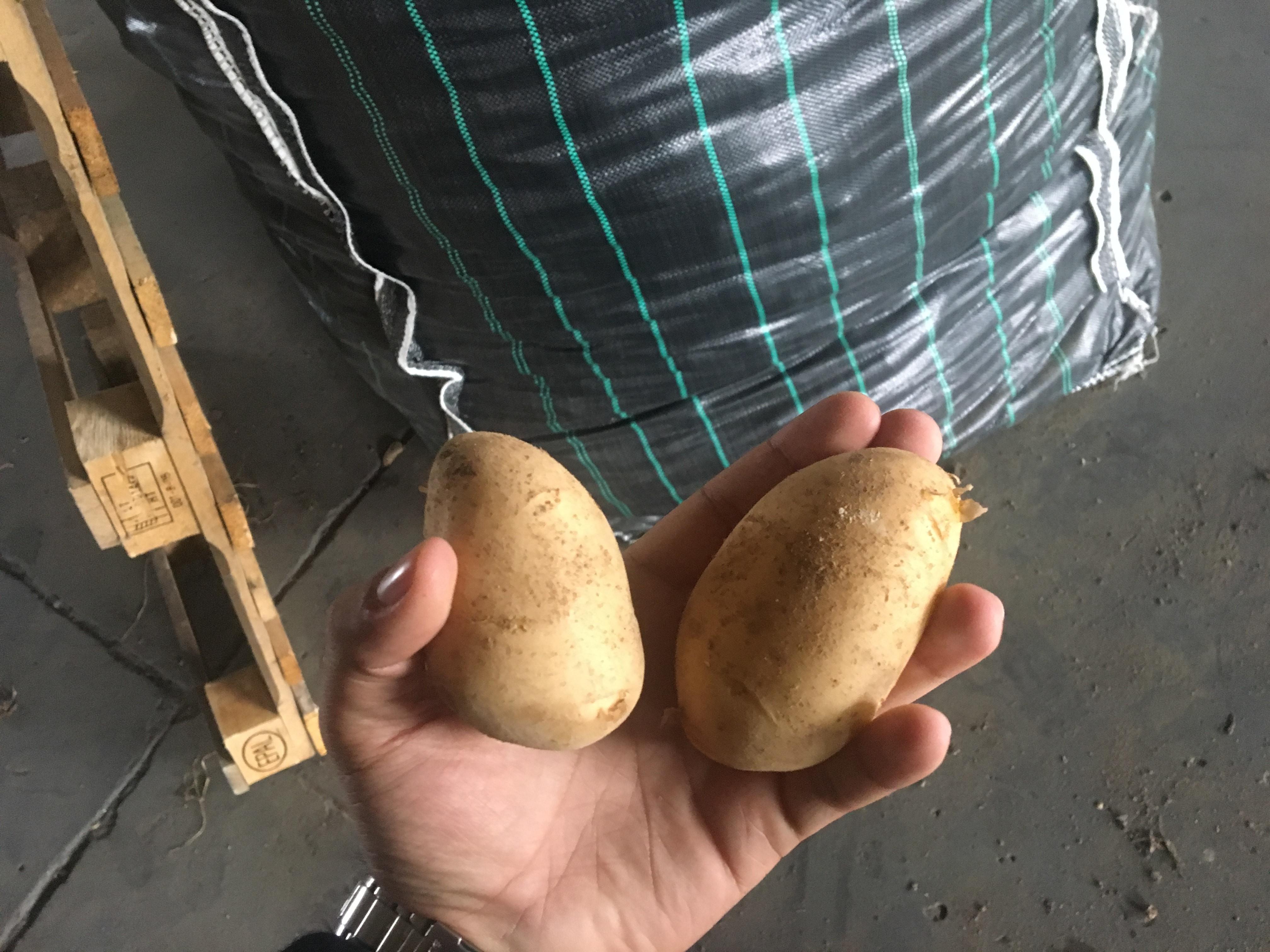 Hot Selling Vegetable Fresh Potato Wholesale Fresh Potatoes