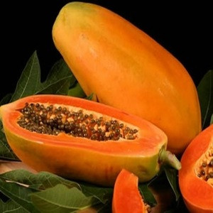 Wholesale Fresh Papaya / Papaya Fruit Price