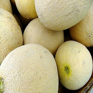 Fresh Melons available for sale