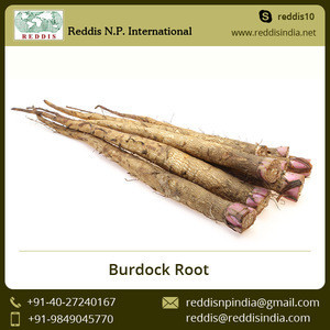 Wholesale High Quality Burdock Root Price