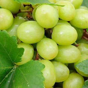 Fresh greem grapes