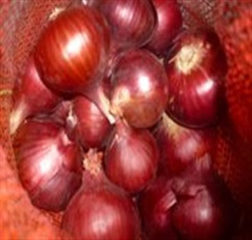 Red onion, new Egyptian harvest, 2020