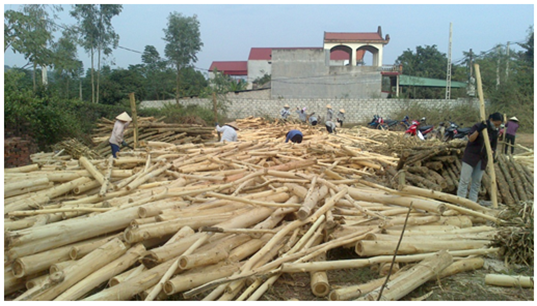 Excellent Quality Wood chips - Pine/ Acacia/ Rubber Wood chips for Fuel and Paper