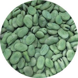 Factory Price Bulk Wholesale Frozen Fresh Green Broad Beans