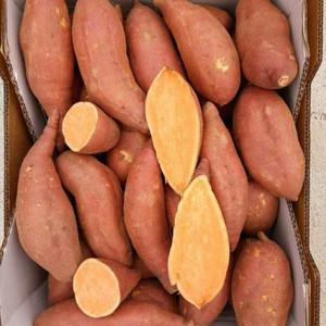 Red / Yellow Chinese Fresh Sweet Potato