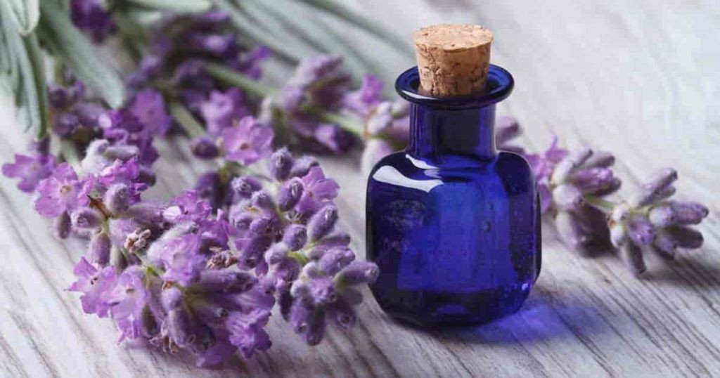 Bulgarian Pure Lavender Oil