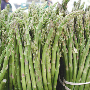 Best Quality Fresh Asparagus for Sale