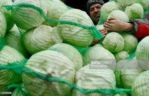 Fresh Cabbages,Fresh round cabbages,Fresh Frozen cabbages